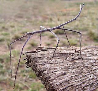 el mundo de los insecto: