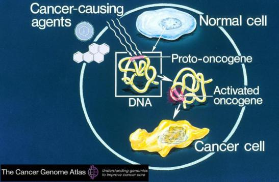 cancer-genome-atlas-cell-dna-oncogen