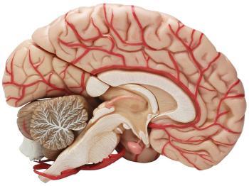 mitos-sobre-el-cerebro-3