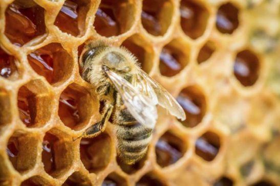 Por-que-la-miel-no-se-descompone-2